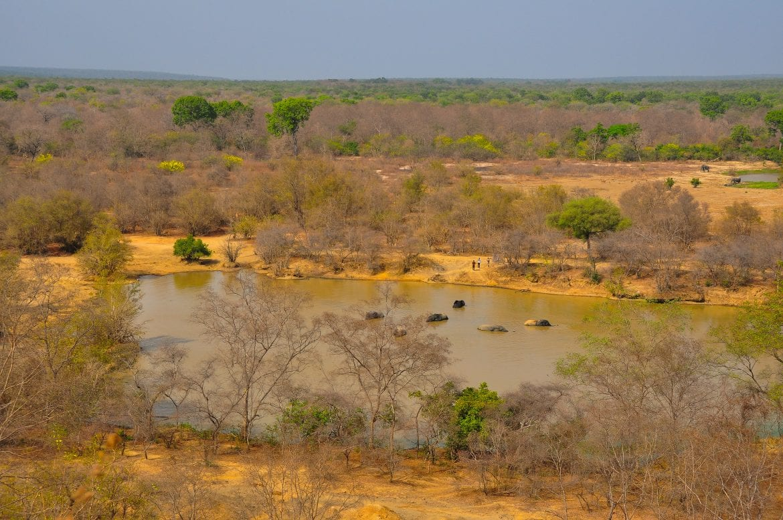 Charca con elefantes