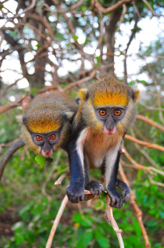 Monos llenos de curiosidad