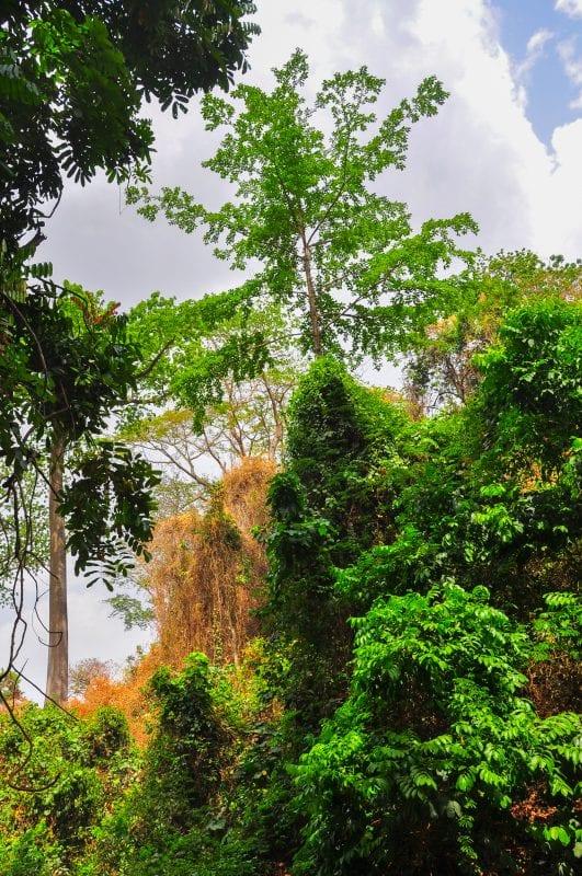 Paisaje de Kintampo