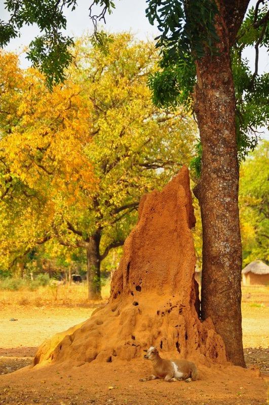 Termitero hacia Sindou