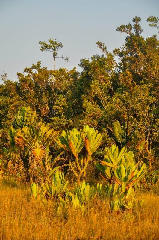 Flora de Ampitabe