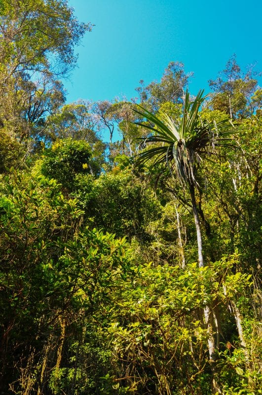 Selvas de Vohimana