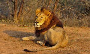 Kruger Park Sur