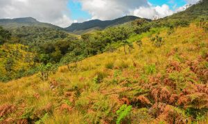 Horton Plains Park