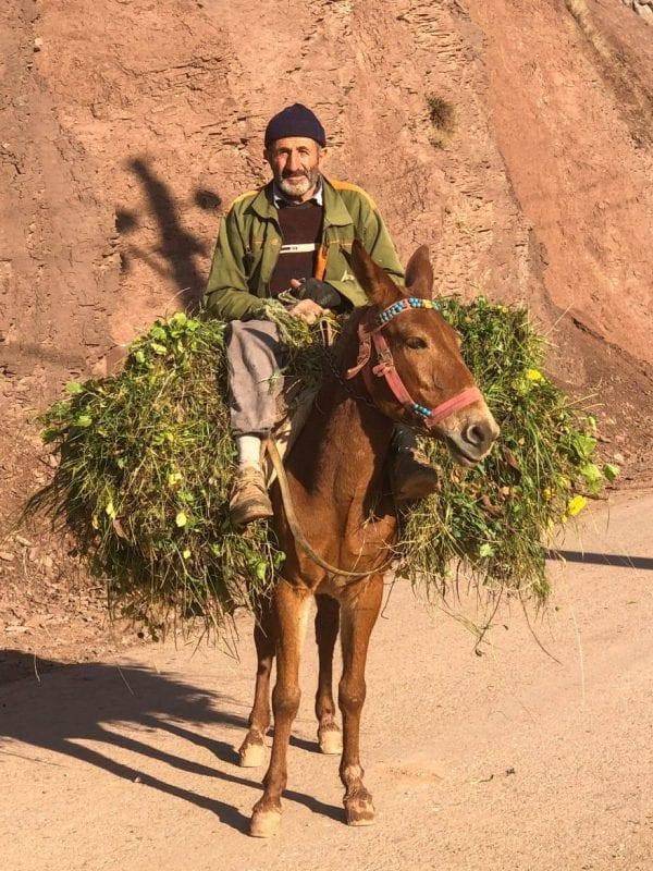 Lugareño en Alamut