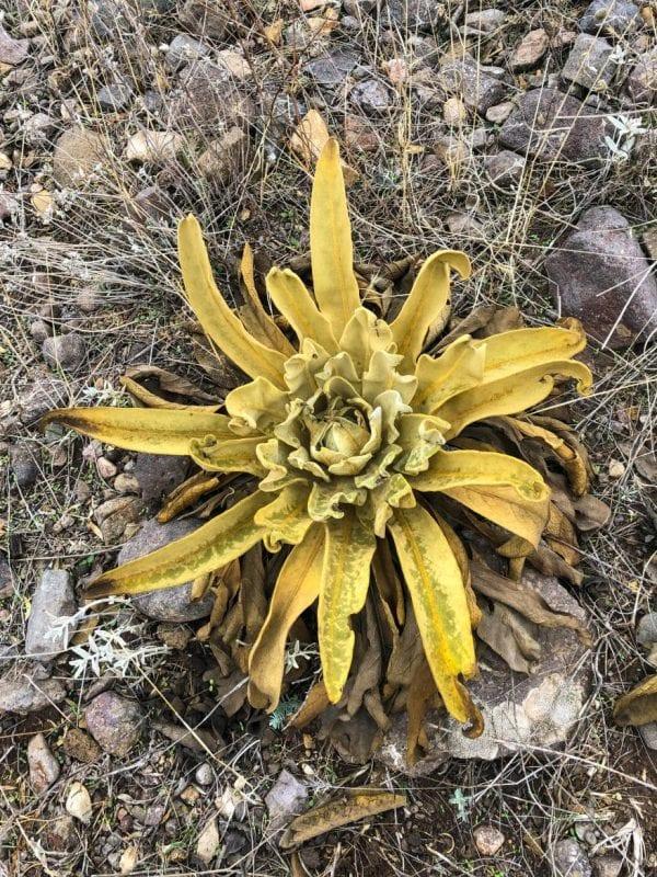 Plantas en Alamut